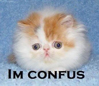 confus cat