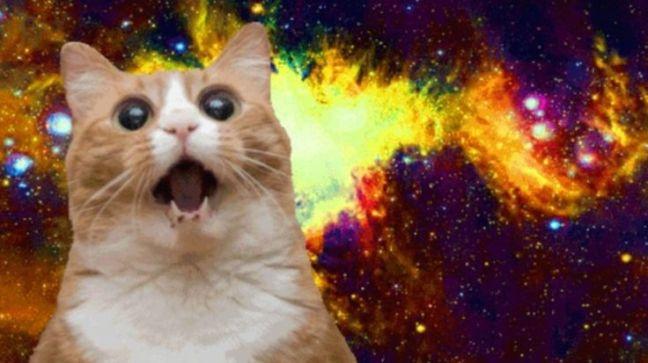 omg space cat